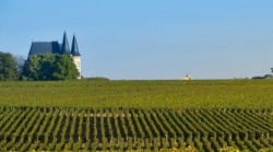 Study International Wine & Spirits Management in Vatel Bordeaux (France)