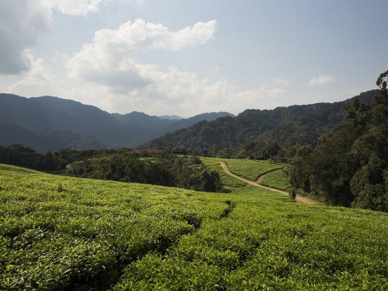 Vatel Kigali - Rwanda - 19
