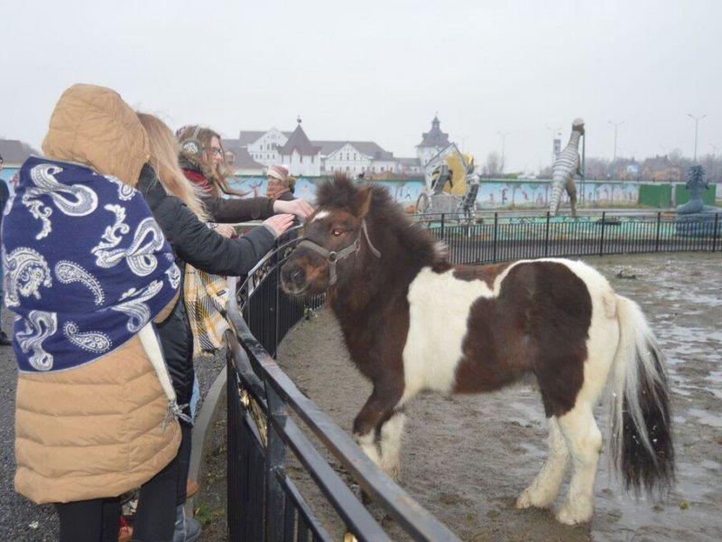 Vatel МОСКВА (Moscow) - Студенты Ватель в гостях на ферме «Северный олень» - 42