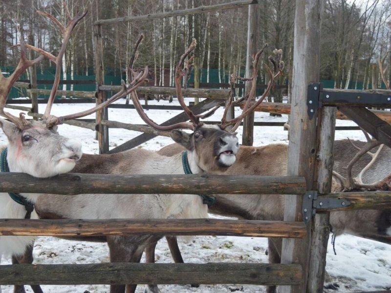 Vatel МОСКВА (Moscow) - Студенты Ватель в гостях на ферме «Северный олень» - 50