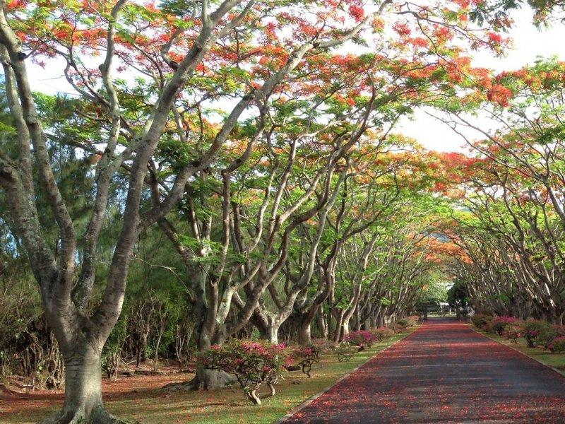 Vatel Mauritius - Campus - 13