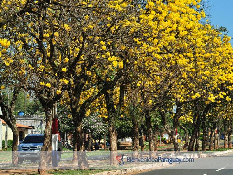 Vatel Asunción - Asuncion - 9