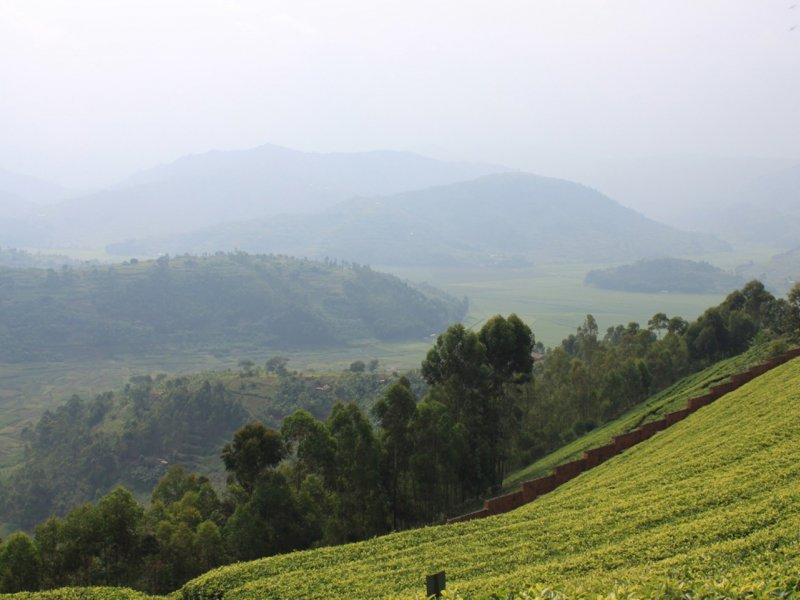 Vatel Kigali - Rwanda - 5