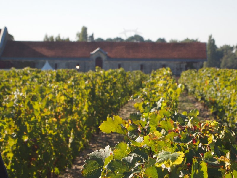 Vatel Bordeaux - Wine Tour & Workshops - 1