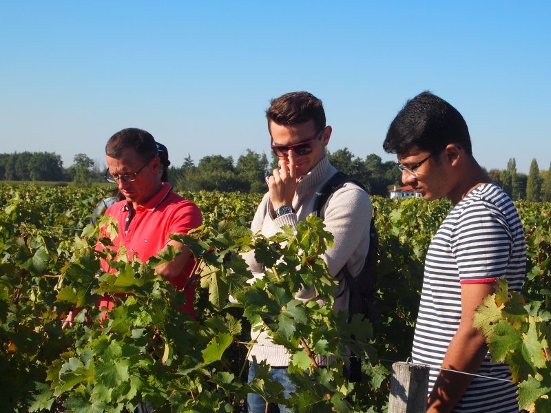 Vatel Bordeaux - Wine Tour & Workshops - 3
