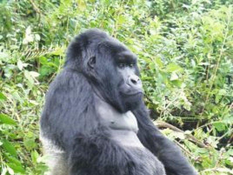 Vatel Kigali - Rwanda - 15